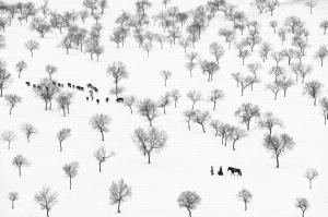 SIHIPA Merit Award - Xunlei Li (China) <br /> Grazing Forest In Winter