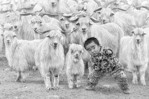 SIHIPA Merit Award - Hiu Wan Yeung (Hong Kong) <br /> The Little Shepherd