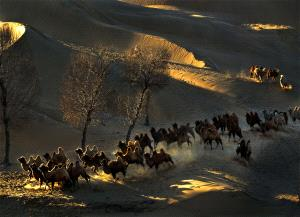 APAS Gold Medal - Daming Liang (China) <br /> Desert Camels