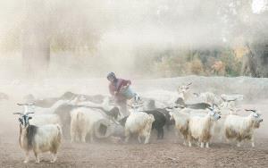 APAS Honor Mention - Jianhui Liao (China)  Pastoral