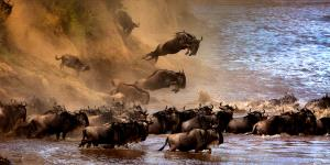 PhotoVivo Honor Mention - Sergey Agapov (Russian Federation)  The Great Migration Of Wildebeest 2