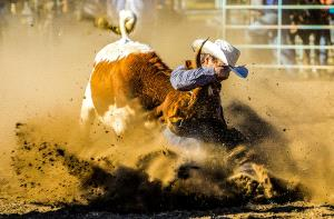 SIHIPC Merit Award - Weiping Peng (Australia)  Catching Cattle Show