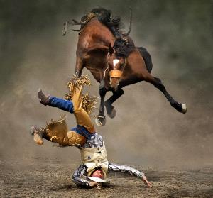 PhotoVivo Honor Mention - Kam Chiu Tam (Canada)  Horse In Air