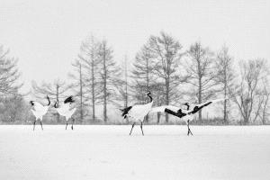 PSA HM Ribbons - Alexey Suloev (Russian Federation) <br /> Crane Games