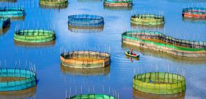 SIHIPC Bronze Medal - Siping Li (China) <br /> Seven Colored Fishing Grounds