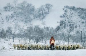 PhotoVivo Honor Mention - Muyang Zhou (China)  Snow Dusk