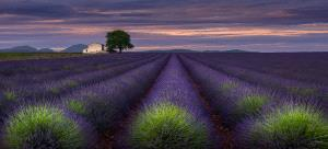 SIHIPC Merit Award - Sergey Aleshchenko (Russian Federation) <br /> Lavender Evening In Provence