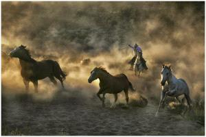 PhotoVivo Honor Mention - Thomas Lang (USA) <br /> Chasing Mustang 09-01