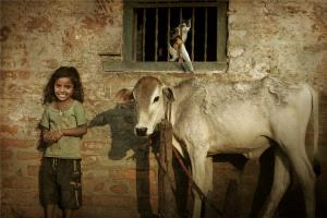 SIHIPC Merit Award - Peiwang Huang (China)  Nepali Girls And Cows And Kittens1