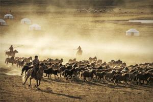 SIHIPC Gold Medal - Yan Yang (China)  Grassland Pastoral